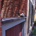 Cat on the Wall in Frederick, MD